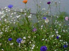 My Wild Flower Garden.