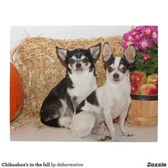 Chihuahua's in the fall jigsaw puzzles