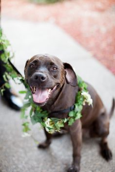 Dog with Floral Collar | photography by http://www.loriphoto.com