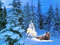 wolf christmas backgrounds | Download Christmas Animals wallpaper, 'christmas wallpaper wolf'.
