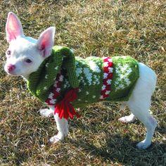 Green Snow Hoodie Sweater – Bella & Zeus