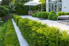 Formal structural garden   Tiered yew hedges edging patio, sloping bank, box balls on terrace, table and chairs
