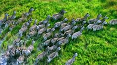 Zebra Grass nature 1920x2560