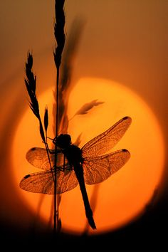 Photography Discover Waking up to the beautiful creation of God. Dragonfly Quotes, Dragonfly Art, Dragonfly Photography, Nature Photography, Nature Pictures, Beautiful Pictures, Amazing Nature, Belle Photo, Sunrise