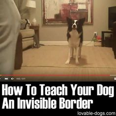 How To Teach Your Dog An Invisible Border ►► http://lovable-dogs.com/how-to-teach-your-dog-an-invisible-border/?i=p