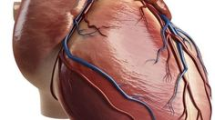 Experimenting on #pigs, scientists have injected the animals' hearts with a #gene, which goes on to develop some of #heart's muscles into a natural #pacemaker.