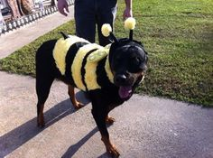 Float like a butterfly, sting like like a bee!