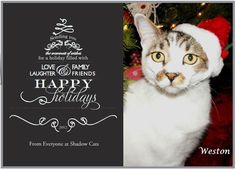 Happy holidays from everyone at Shadow Cats.