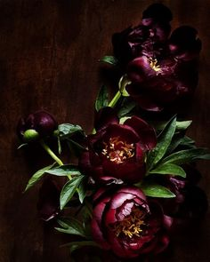 Dark Florals=sophisticated and in trend