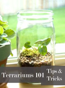 Terrariums… ……….. a 70's comeback Yet another retro element to love. Terrariums! I just made my first one over the weekend.  It turned out great and I am anxious to …...
