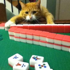 """I only play mahjong on days that end in """"Y."""""""