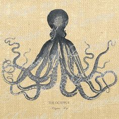 Octopus Ocean Sea Antique Vintage Download by HouseofSimoneArtDept, $1.25