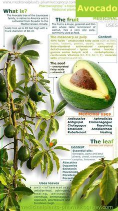 The AVOCADO Health infographics, Healthy food infographics, Healthy living infographics