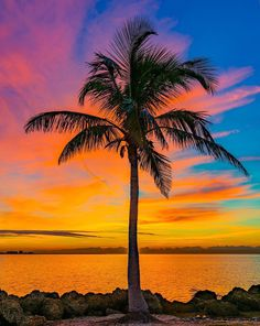 Beautiful pictures, lake pictures, palm tree sunset, palm trees, sunset w. War Photography, Types Of Photography, Landscape Photography, Wildlife Photography, Beautiful Sunset, Beautiful World, Beautiful Places, Beautiful Pictures, Lake Pictures