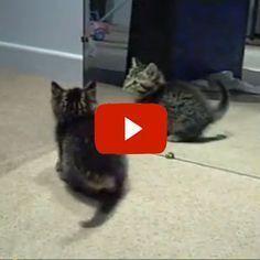 Cute Kitten Going Crazy!