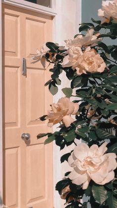 Wallpaper rose white wallpaper on Wallpaper Rose, Iphone Background Wallpaper, Tumblr Wallpaper, Hipster Phone Wallpaper, Desktop Backgrounds, Aesthetic Pastel Wallpaper, Aesthetic Backgrounds, Aesthetic Wallpapers, Peach Aesthetic