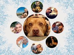 cesar's dog daddy | Most fave dog. #daddy