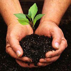 Beginner Gardening Tips :)