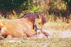 #polishhorse #horsefun