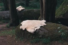 Naturally Handtanned Sheepskins - WILD ANA CROW    #wildcamping #sheepskin #sheepskintanning #naturalpelt #wildanacrow