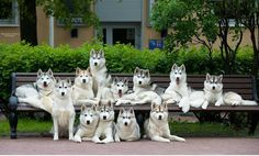 """Family photo ~ AMAZING THEY ALL SIT STILL FOR PHOTO ~"