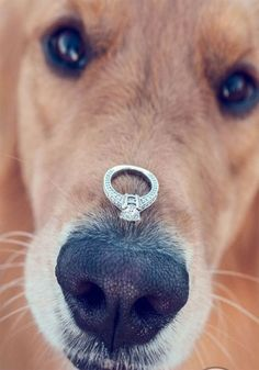 15 Creative Ideas For The Best Engagement Announcement - Including This SUPER Cute Photo With Your Dog! • Wedding Ideas magazine