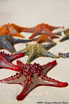 Starfish from a reef off Zanzibar Africa, by Stefano Minella.  https://www.facebook.com/stefano.minella.photographer