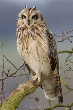 Short Eared Owl by Tony House, via 500px. When the owl is one of your power animals, you have a strong intuition and can access information and wisdom that's usually hidden to most. The spirit of this animal encourages you to look beyond deceiving appearances into the true reality of a situation or a person's motives.