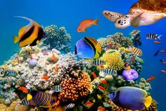 Underwater world fish turtles corals tropical sea ocean coral reef . Coral Wallpaper, Tier Wallpaper, Animal Wallpaper, Wall Wallpaper, Underwater Fish, Underwater Creatures, Underwater World, Underwater Animals, Fish Tank Supplies