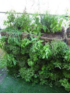 Mur végétal de plantes aromatiques, création Pierre-Alexandre Risser