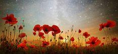 Moonrise Kingdom by Adrian Borda moonrise over a poppy field