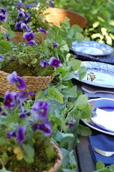 violets--use as centerpieces and gifts with shovels, stars, seeds, and watering cans