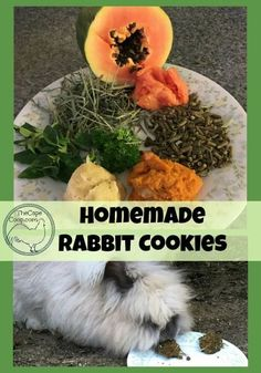 Homemade Rabbit Cookies - The Cape Coop Meat Rabbits, Raising Rabbits, Bunny Rabbits, Baby Bunnies, Chinchilla, Homemade Rabbit Treats, Homemade Dog, Healthy Treats, Yummy Treats