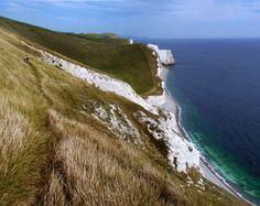 White Nothe, Purbeck, Dorset. Coastal walk with the dalmatian