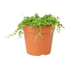 Outdoor pots and plants - IKEA