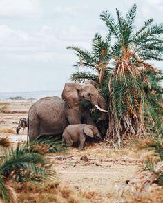 Kenya.  Animals photo by ioegreer http://rarme.com/?F9gZi