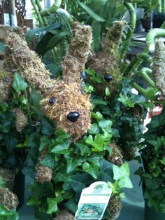 Ivy Bunnies! So cute, perfect for Easter.  http://www.facebook.com/pages/American-Plant/111708498851820 http://www.americanplant.net/