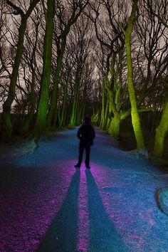 Storeton Woods - Light Painted (17/52)