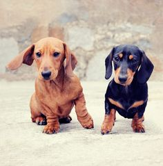 Puppies! Remind me of you, don't you have a little one?@Hayley Nicole