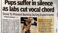 ✦ BEAGLE PUPS SUFFER IN SILENCE WHEN THE LABS CUTS THEIR VOCAL CORDS DONE TO PREVENT BARKING DURING EXPERIMENTS IN LABS IN INDIA ✦ JUSTICE MUST BE DONE AND OUR VOICES MUST BE HEARD !! PLEASE SIGN & SHARE WIDELY THIS PETITION ➨http://www.change.org/petitions/stop-unethical-usage-of-beagles-in-clinical-trial-testing