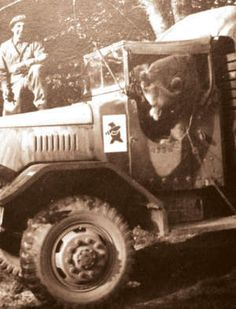 """Wojtek The Bear - Polish War Hero /WWII/ Wojtek was officially enlisted in the Polish Army and given the rank of Private. Private Wojtek """"helped"""" unload trucks packed with heavy artillery boxes. Wojtek Bear, Army Cats, Poland Ww2, Angels And Demons, My Heritage, North Africa, World War Two, Wwii, Badass"""