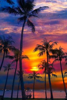 Ideas For Palm Tree Night Beautiful Sunset Nature Pictures, Cool Pictures, Beautiful Pictures, Tree Wallpaper Iphone, Wallpaper Backgrounds, Trendy Wallpaper, Iphone Backgrounds, Girl Wallpaper, Screen Wallpaper