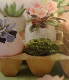 mini plants and flowers potted in egg shells