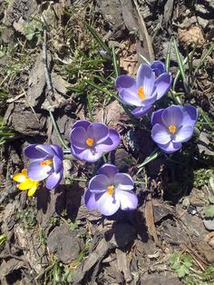 Best bulbs for naturalizing from The Old Farmer's Almanac.