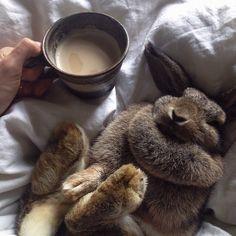 cocoa + bunny