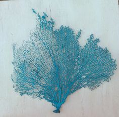 Decorative Turquoise Sea Fan Branch Beach Nautical Decor