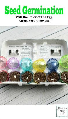 Seed Germination - Will the Color of the Egg Affect Seed Growth Cool Science Experiments, Stem Science, Preschool Learning Activities, Preschool Science, Spring Activities, Science For Kids, Stem Activities, Science Projects, Science Ideas