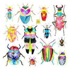 Watercolor Beetles Art Illustration Print.