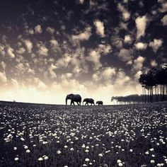 soo pretty!!! i soo wanna go on a safari one day and see elephants & tigers :)
