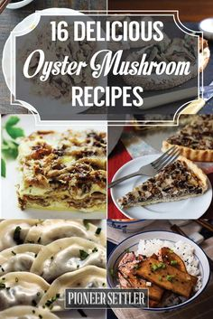16 Mouth-Watering Oyster Mushroom Recipes | Easy and Quick Homemade Recipe by Pioneer Settler at http://pioneersettler.com/oyster-mushroom-recipes/